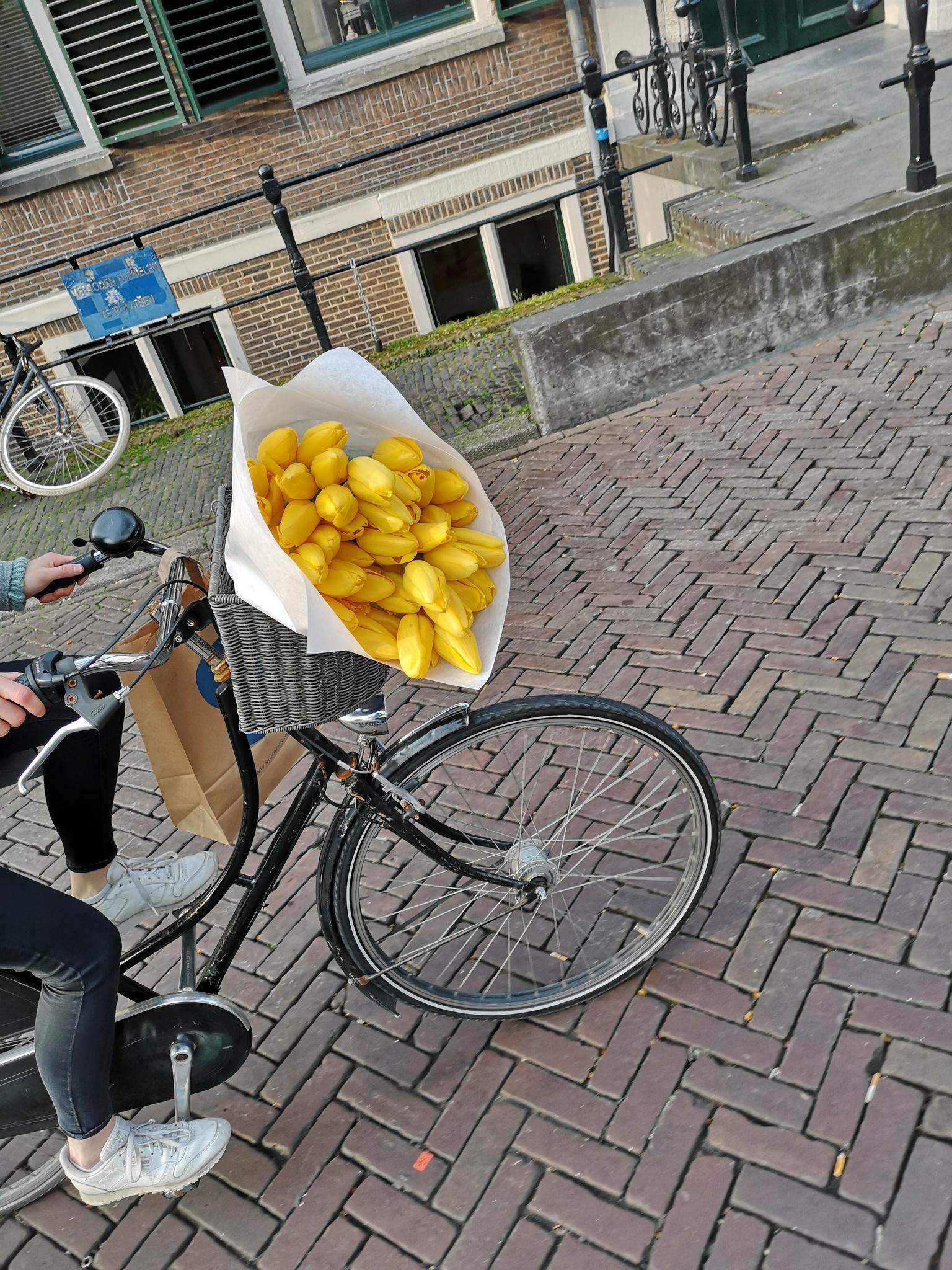 Guide til Utrecht, Holland - dagstur fra Amsterdam 3